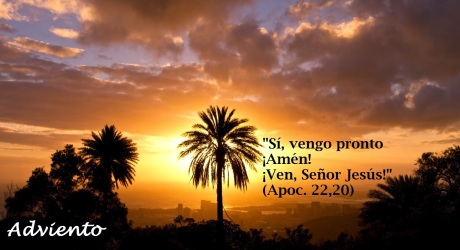 palm_tree_in_sunset_light-wallpaper-1600x900